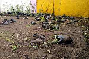 मामला - 450 करोड़ कापौधारोपण घोटाला- क्लीन चिट देने की कोशिशें - कटघरे में सरकार - माकपा