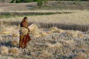व्यापारियों को गाँव गाँव जाकर खरीदी की अनुमति - किसानो की लूट की खुली छूट